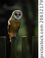 wood owl green 26632179