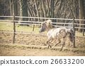 A pony galloping in the sun 26633200