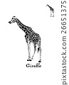 vector, illustration, giraffe 26651375
