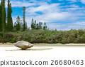 Pischenne Naturre (นิวแคลิโดเนีย Ile des Pins) 26680463