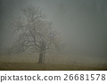 Lone tree with fog 26681578