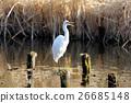 wild, bird, birds 26685148
