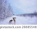 dog sled, dogsled, snow 26685548