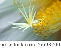 花朵 花卉 花 26698200