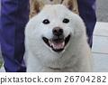 Shiba Inu 26704282