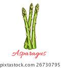 芦笋 蔬菜 矢量 26730795