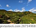 과수, 시즈오카 현, 밭 26734968
