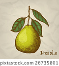 Pomelo. Vector hand drawn illustration. Pomelo 26735801