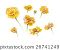 watercolor painting of flower, on white background 26741249