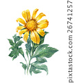 watercolor  painting of Yellow flower sunflower 26741257