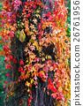 Climbing plant in autumn 26761956