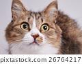고양이의 시선 26764217