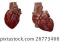 3d rendered medical illustration of a human heart 26773466
