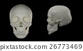 3d render of the Human Skull 26773469