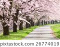 ถนนหลัก,แนวต้นไม้ริมถนน,ดอกไม้บานเต็มที่ 26774019