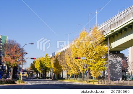 Nagoya city city scenery Ginkgo biloba trees at Wakamiya main street Namiki Chihaya intersection 26780666