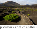 grapes cultivation   winery lanzarote  26784643