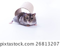 Little and Cute Hamster 26813207