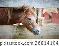 horse, fence, animal 26814104