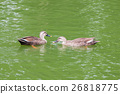 couple duck pond 26818775