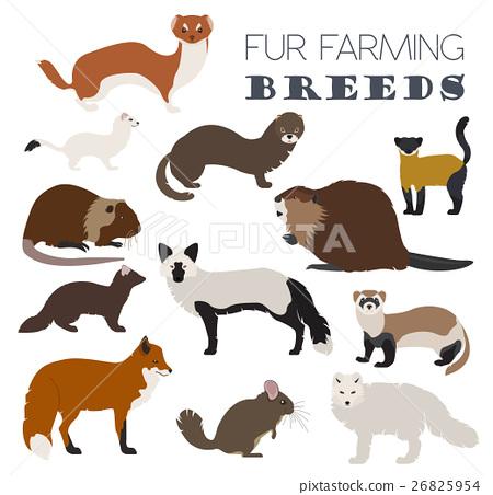 Fur farming. Flat design 26825954