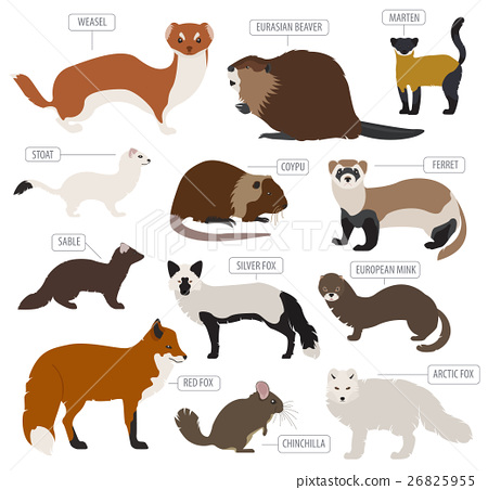 Fur farming. Flat design 26825955