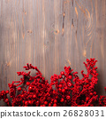 Holly berry twigs on wood wall 26828031
