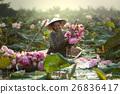 Lotus flower 26836417