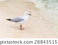 Seaside seagull 26843515
