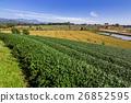 Tea plantation blue sky background 26852595