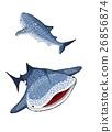 鲸鲨 鲨鱼 非正式夏季和服 26856874
