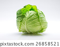 甘藍 包菜 椰菜 26858521