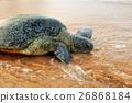 Turtle 26868184
