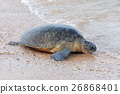 Turtle 26868401