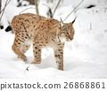 Lynx 26868861