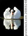 Swan 26869248