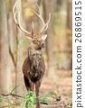 Deer 26869515