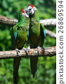 Parrot bird sitting on the branch 26869594