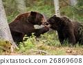Bear 26869608