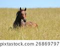 Horse 26869797