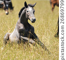 Horse 26869799