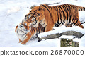 Tiger 26870000