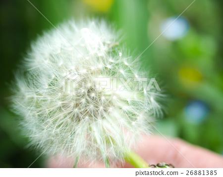 生命的希望種子 26881385