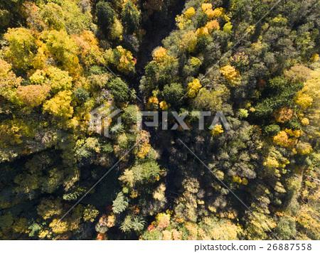 가을 숲의 공중 촬영 (진정한 부감) 26887558