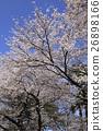 가나자와 겐로쿠엔의 벚꽃 26898166