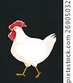 Chicken 26905032