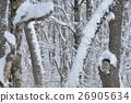 นกฮูก,ฉากหิมะ,นก 26905634