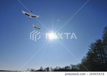 Cranes and sun 26905658