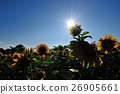 Sun and Sunflower 26905661