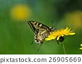蒲公英燕尾蝶 26905669